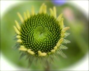 0fibonacci_mod